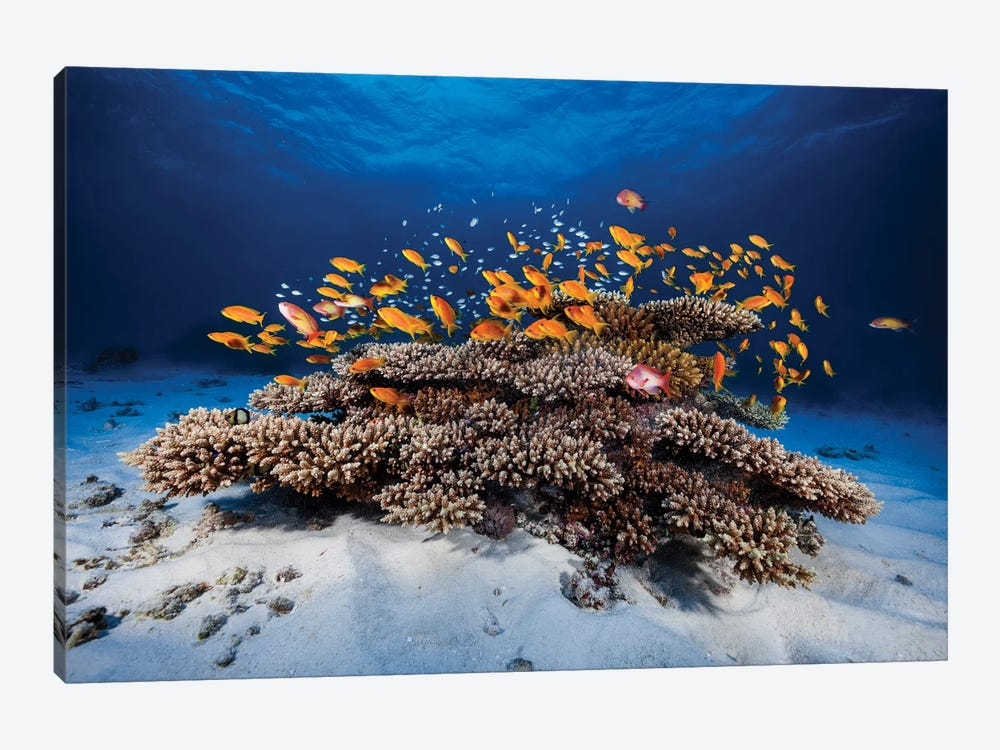 Marine Life by Barathieu Gabriel 1-piece Canvas Art