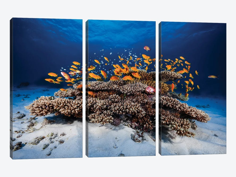 Marine Life by Barathieu Gabriel 3-piece Canvas Art