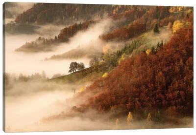 November's Fog Canvas Art Print