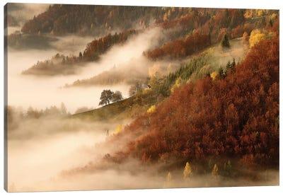 November's Fog Canvas Print #OXM1236