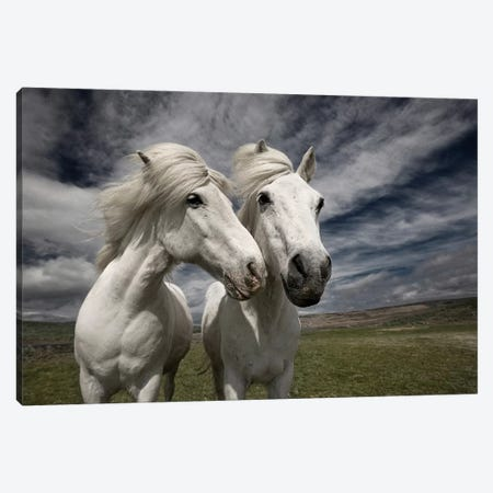 Inseparables Canvas Print #OXM1243} by Bragi Ingibergsson Canvas Art