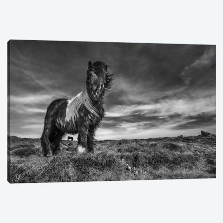 Two Of A Kind Canvas Print #OXM1247} by Bragi Ingibergsson Art Print