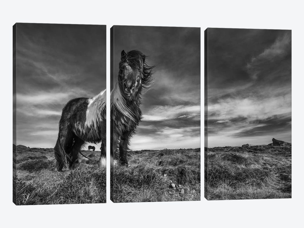 Two Of A Kind by Bragi Ingibergsson 3-piece Canvas Print