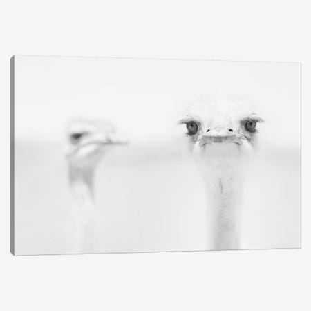 You Talkin' To Me? Canvas Print #OXM1258} by Carlo Tonti Art Print