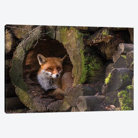 Fox Canvas Print #OXM1261} by Cees van Ginkel Canvas Artwork