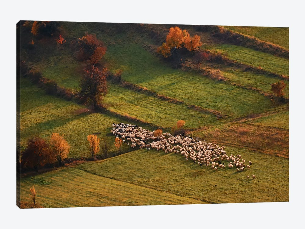 Sheep Herd At Sunset by Cristian Lee 1-piece Canvas Wall Art