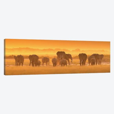 Golden Light Canvas Print #OXM1297} by David Hua Canvas Art