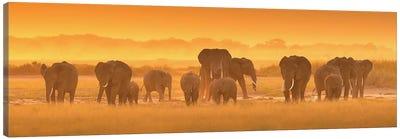 Golden Light Canvas Art Print