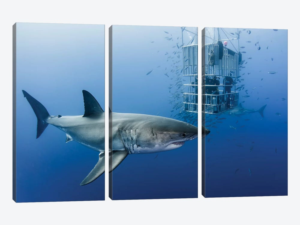 Animals In Cage by Davide Lopresti 3-piece Canvas Wall Art