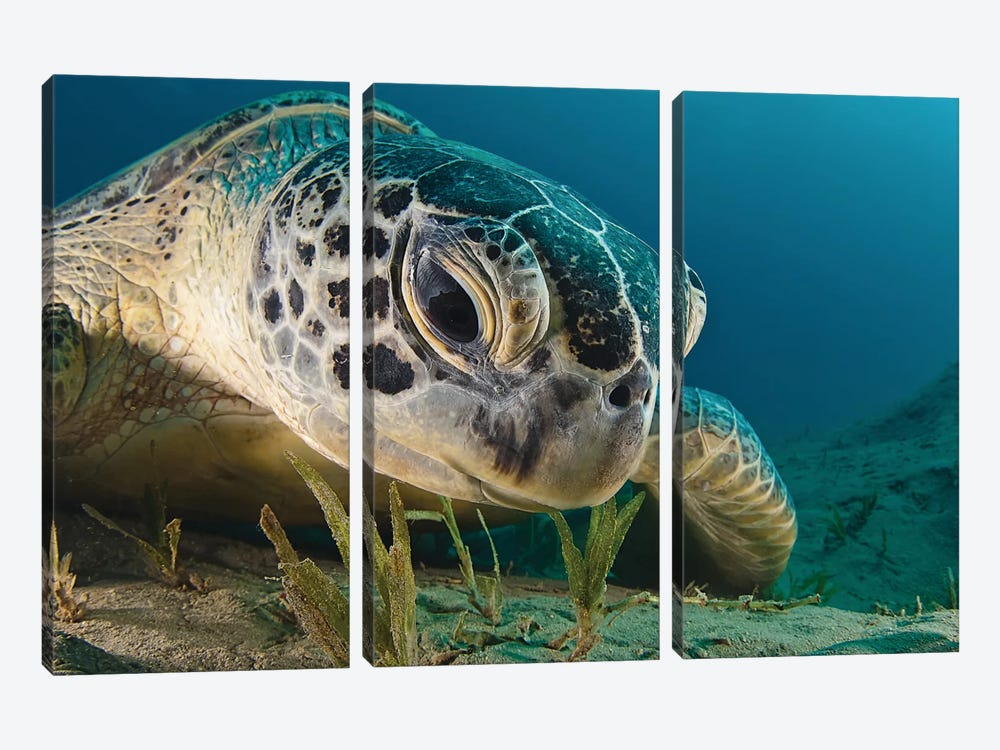 Gaze by Dmitry Marchenko 3-piece Canvas Print