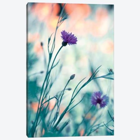 Colors Game II Canvas Print #OXM1356} by Fabien Bravin Canvas Print