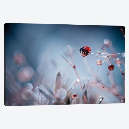 High Diving Canvas Print #OXM1357} by Fabien Bravin Art Print