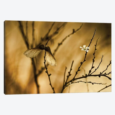 Un Altra Storia Canvas Print #OXM1358} by Fabien Bravin Canvas Art