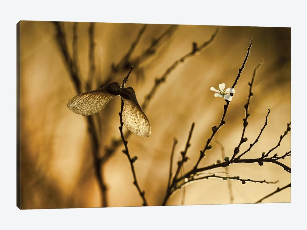 Un Altra Storia by Fabien Bravin 1-piece Canvas Wall Art