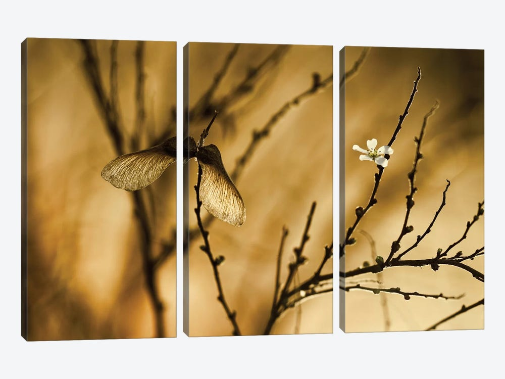 Un Altra Storia by Fabien Bravin 3-piece Canvas Artwork