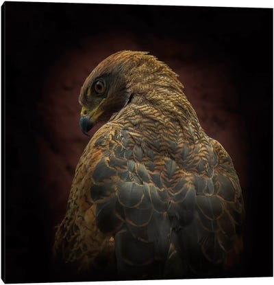 Somebody Watch Me (Savanna Hawk) Canvas Art Print