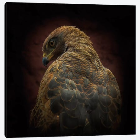 Somebody Watch Me (Savanna Hawk) Canvas Print #OXM1369} by Ferdinando Valverde Canvas Print