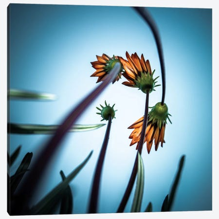 Flower Love Canvas Print #OXM1370} by fgr100 Canvas Art