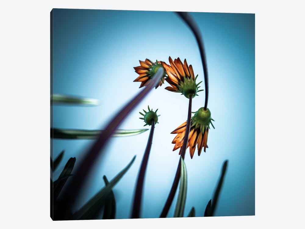 Flower Love by fgr100 1-piece Canvas Wall Art