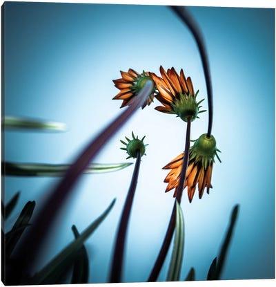 Flower Love Canvas Art Print
