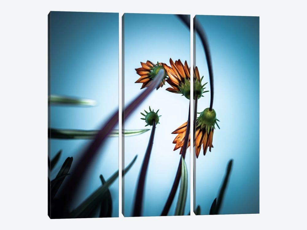 Flower Love by fgr100 3-piece Canvas Wall Art