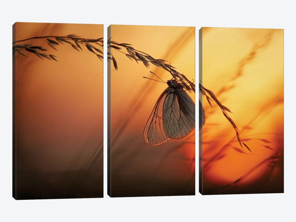 Good Night by Francois Casanova 3-piece Canvas Print