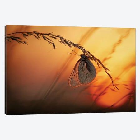 Good Night Canvas Print #OXM1377} by Francois Casanova Art Print