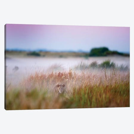 Hide And Seek Canvas Print #OXM1387} by Frits Hoogendijk Canvas Art