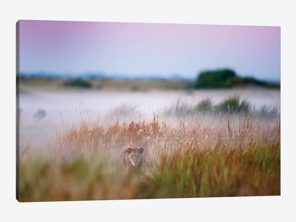 Hide And Seek by Frits Hoogendijk 1-piece Canvas Wall Art
