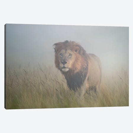 King In The Mist Canvas Print #OXM1388} by Frits Hoogendijk Art Print