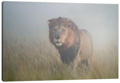 King In The Mist Canvas Art Print