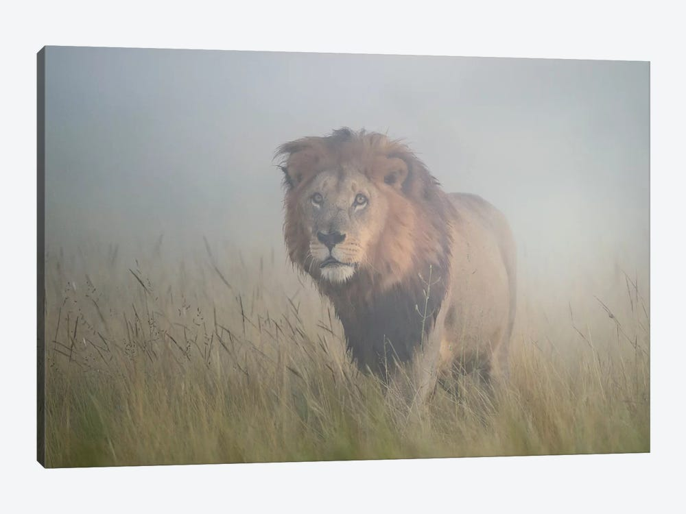 King In The Mist 1-piece Art Print
