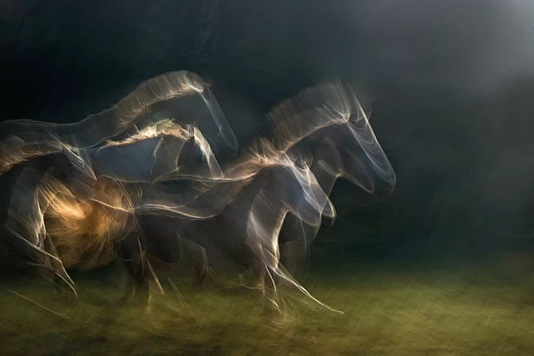 Echoing In Motion Canvas Artwork By Milan Malovrh Icanvas