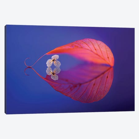 Flower In Heaven Canvas Print #OXM13} by Sophie Pan Canvas Wall Art