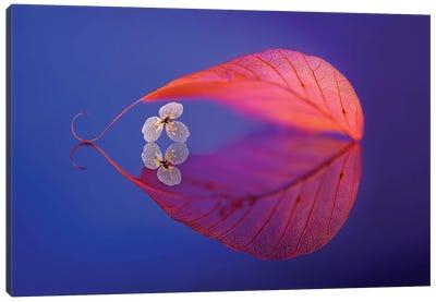 Flower In Heaven Canvas Art Print