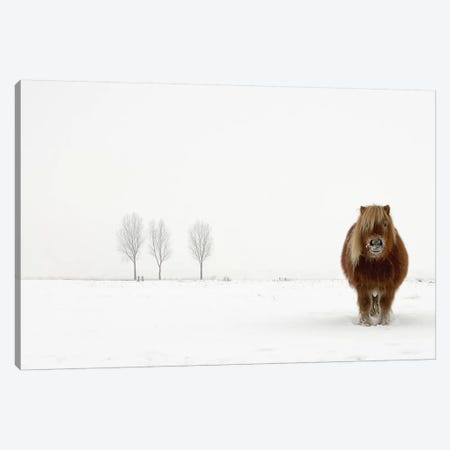 The Cold Pony Canvas Print #OXM1401} by Gert van den Bosch Canvas Art