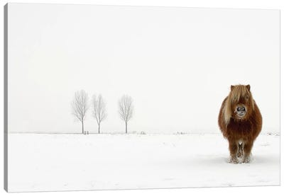The Cold Pony Canvas Art Print