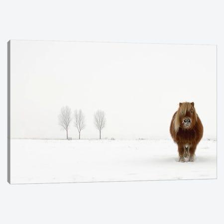 The Cold Pony Canvas Print #OXM1401} by Gert van den Bosch Canvas Art