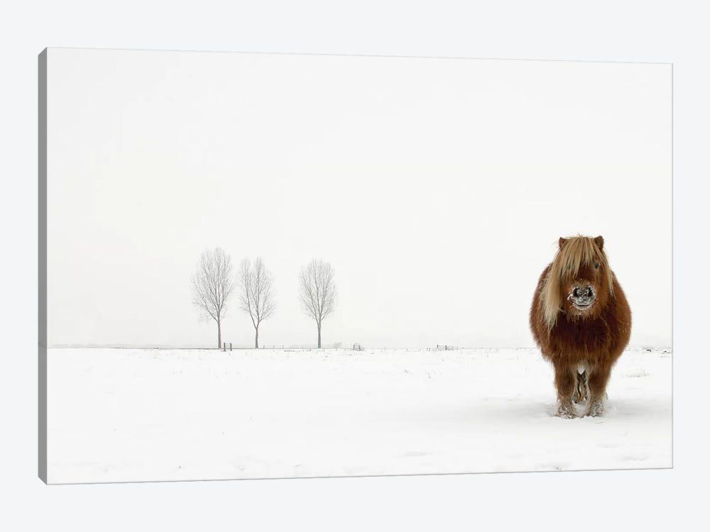 The Cold Pony by Gert van den Bosch 1-piece Canvas Print