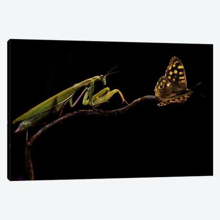 The Escapist Canvas Print #OXM141} by Ferdinando Valverde Art Print