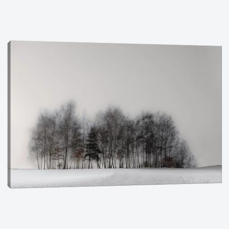 Winter Forest Canvas Print #OXM1436} by Gilbert Claes Canvas Artwork