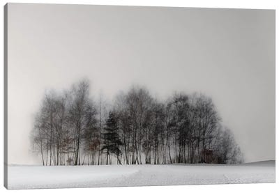 Winter Forest Canvas Art Print