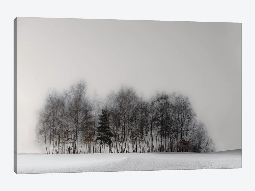 Winter Forest by Gilbert Claes 1-piece Canvas Art Print