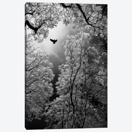 Flight Canvas Print #OXM1448} by Goran Stamenkovic Canvas Artwork