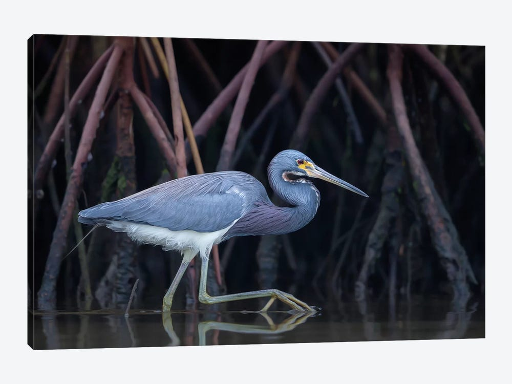 Stalking In The Mangroves by Greg Barsh 1-piece Canvas Artwork