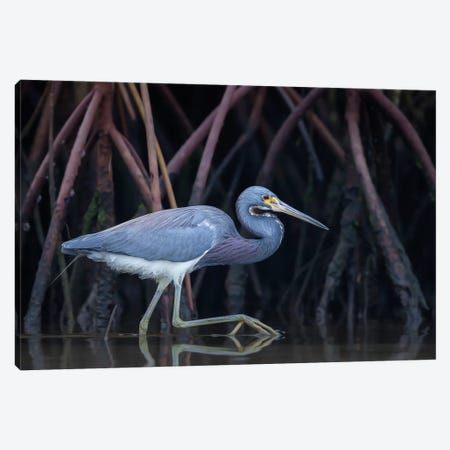 Stalking In The Mangroves Canvas Print #OXM1453} by Greg Barsh Art Print