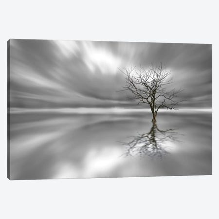 Ghost Tree Canvas Print #OXM147} by Leif Løndal Canvas Wall Art