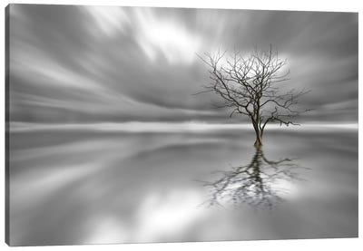 Ghost Tree Canvas Art Print