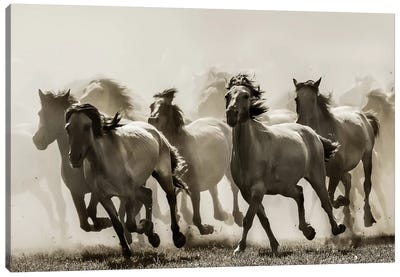 Horse Canvas Print #OXM1485