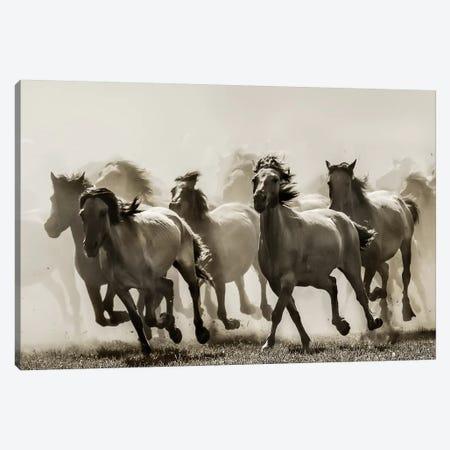 Horse Canvas Print #OXM1485} by Heidi Bartsch Art Print